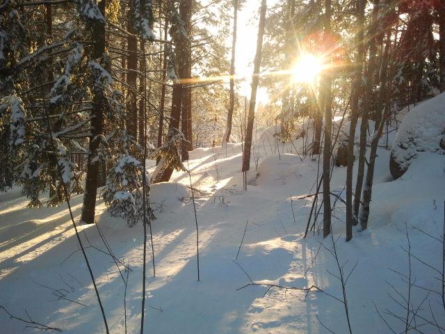 Eftermiddagssol över skogsbacken mellan huset vi bor i och sommarstället på Kretsgången.