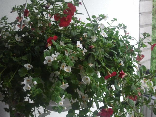 ... och en blomma som nu pryder balkongen men senare kommer att tas till kioskens terrass.