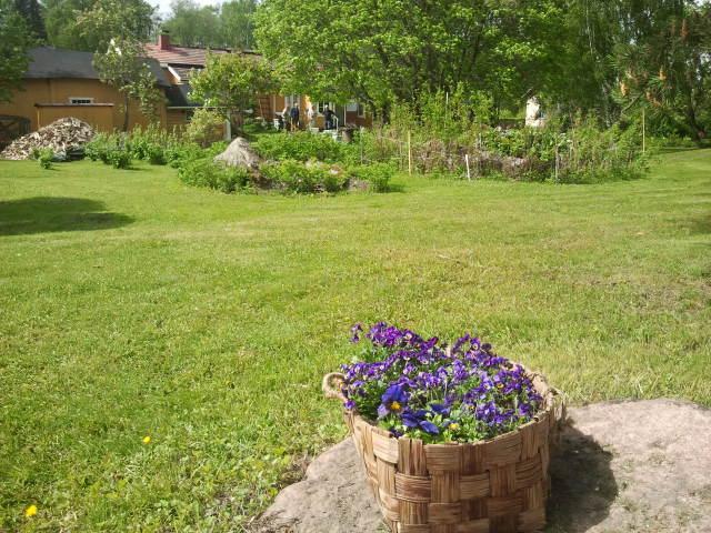 Engströms gård sedd från öst mot väst. En tvättkorg fylld med blommor utgör ett fint blickfång.