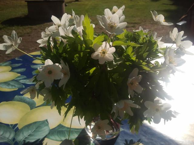 Blommor som svärmor plockat och lagt på bordet i trädgården på Kretsgången.