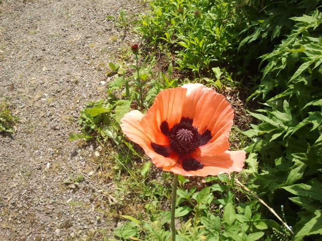 En vacker blomma i trädgården.