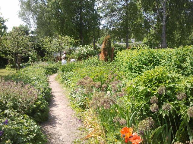 En del av Aaltonens trädgård.