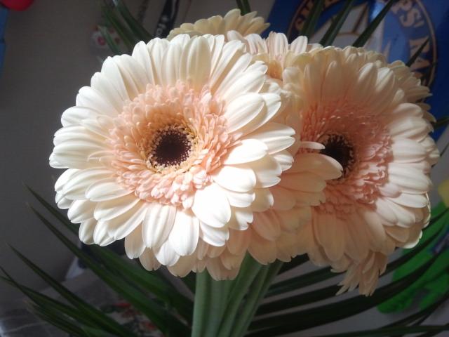 Vi blev ihågkomna också av andra människor den här dagen. Bland annat fick vi de här fina blommorna av min syster och hennes familj.