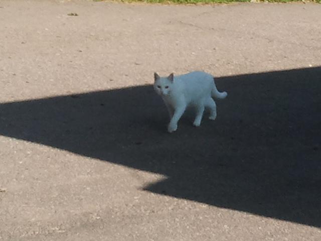 Den här katten går nästan dagligen förbi vår kiosk, ofta i hopp om att hitta små möss i skogen.