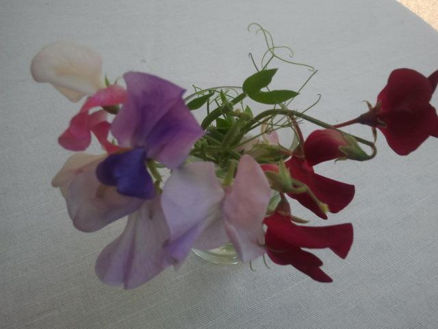 Äntligen har luktärterna börjat blomma, dem jag skrev om tidigare här på bloggen. Det dröjde ungefär två månader från frö till blomma.