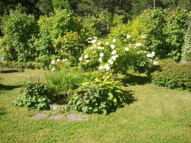 Hela gården vid Kretsgången 8 är en lummig oas.