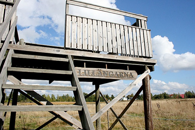 Invid Gamla Valkomvägen ligger Lillängarnas fågeltorn. Det har vi ofta gått eller åkt förbi. Dags att kliva upp i det nu då.
