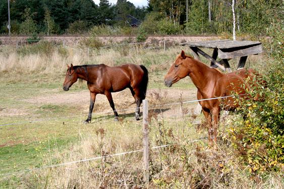 Bongade några hästar också. Visst är de vackra, ståtliga djur.