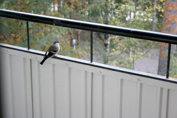 Jag var rädd att fågeln hade skadat sig men efter en stund flaxade den till och flög upp på räcket.
