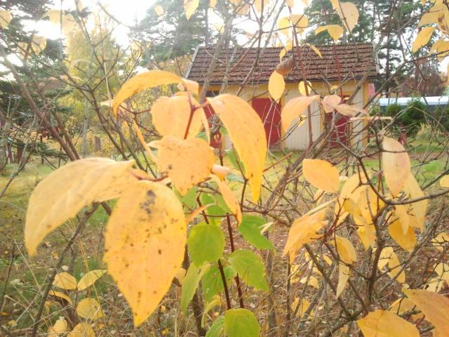 En del löv är gula, andra gröna.
