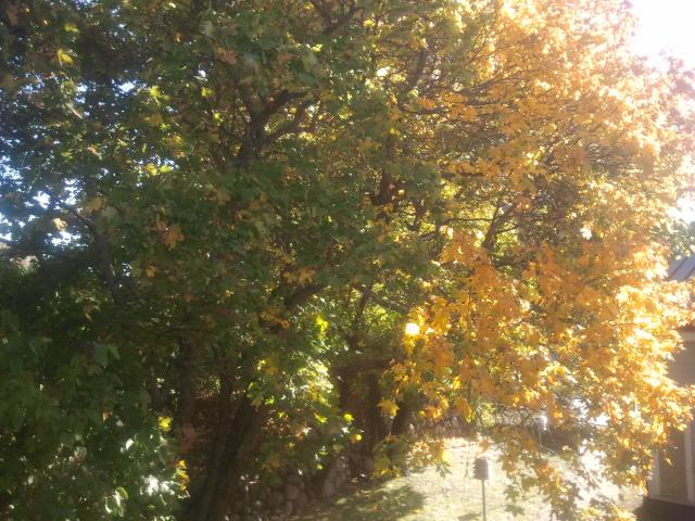 Utsikten från redaktionens fönster torsdagen den tredje oktober.
