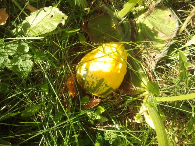 En liten minipumpa lyser som en glad sol på marken.