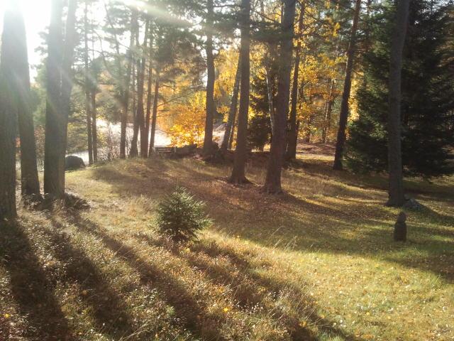 Eftermiddagssolen når vid tretiden inte längre in på gården, men här i skogsdungen bakom husen lyser den så här fin.