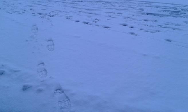 Nyfallen snö och många spår på gång- och cykelbanan. Bara mina som går till busskuren.
