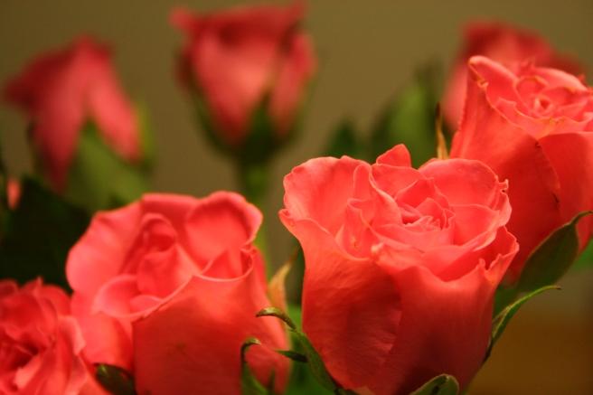 """""""Jag tänkte att vi kunde behöva ett fång med blommor"""" sa maken när han kom hem med dem i dag.  Ja, det måste inte alltid finns en speciell anledning då man köper blommor. De är alltid fina!"""