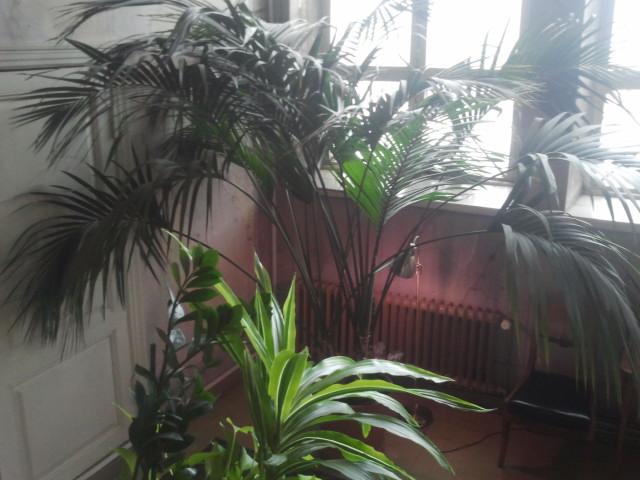 Präktiga växter dom har på stadshuset.