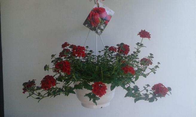 Den här blomman fick jag av svärfar, svärmor och FasterAster.