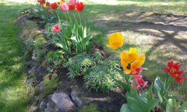 Jag älskar blommor och växter av alla de slag.