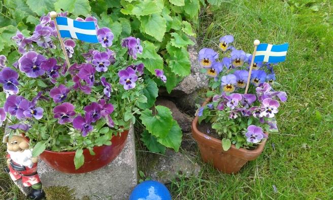 Svenska flaggan i topp också i Finland!