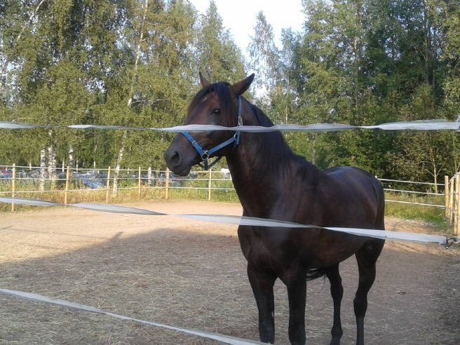 Det fina med travbanan i Lovisa är att du kommer så nära allt. Även de hästar som väntar på sina lopp eller som bara annars går i hagarna.