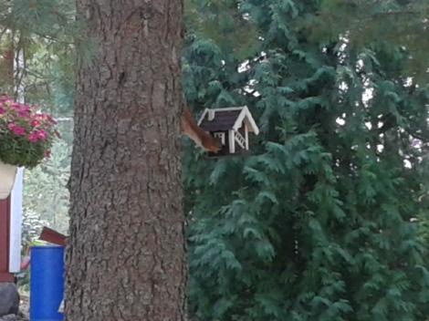 Mums mums, på fågelbrädet finns nötter!