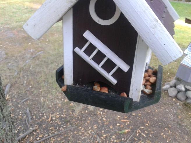 Ekorrarna, hackspetten och en del små fåglar gillar att vi lägger ut nötter på fågelbrädet. Har tänkt fortsätta göra det hela hösten, vintern och våren fastän jag flyttar in till stan.