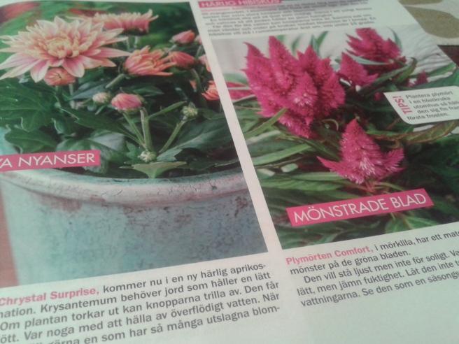 Inspireras av bilder i veckotidningar.