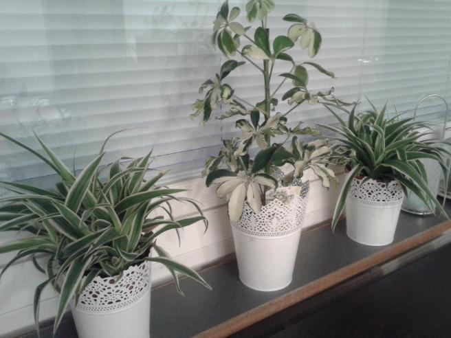 Jag älskar krukväxter och skaffade i går tre nya :-)