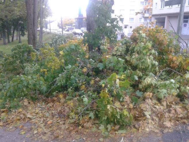 En del av alla grenar som sågats ner i Kapellparken.