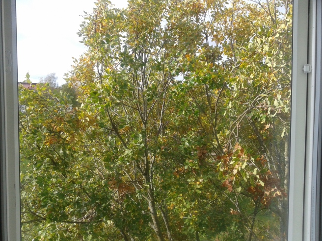Utsikten från mitt arbetsrum en höstförmiddag.