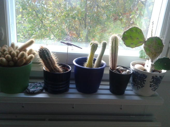 Och på eftermiddagen såg det ut så här då ljuset föll in på min lilla kaktussamling.