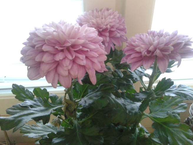 En fin fredag önskar jag er med de här blommorna!