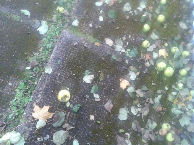 En vacker mossbelupen trottoar med äpplen som prydnader.