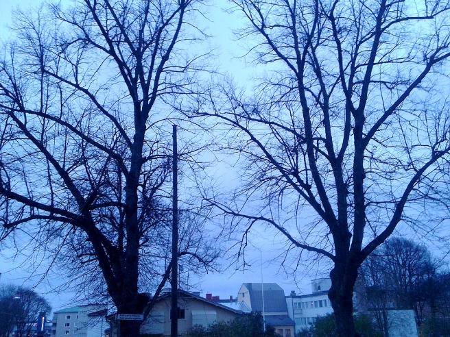 Kala trädgrenar är vackra mot himlen. Är det den här tiden på dygnet, då solen nästan gått ner, som kallas blå timmen?