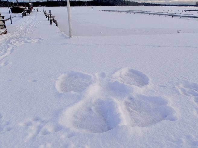 Någon har gjort en snöängel.