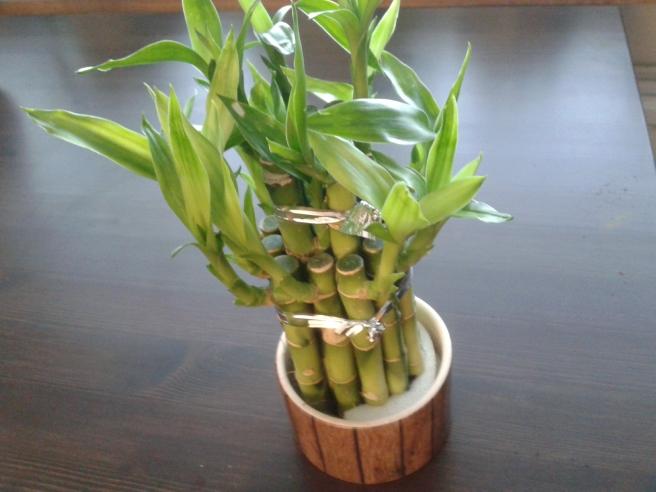 Bambu som för lycka med sig?