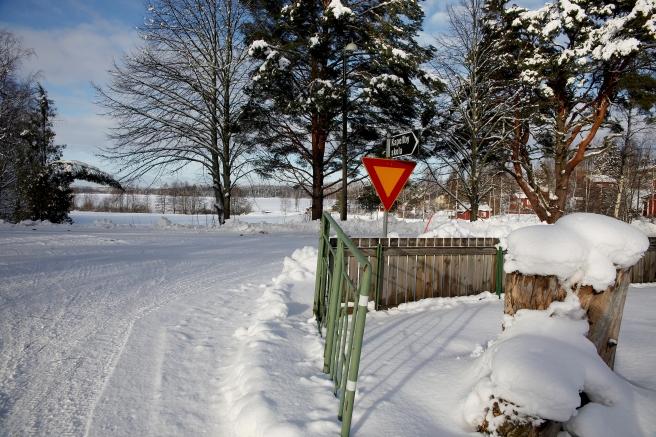 Från skolgården till träsket är det inte många hundra meter.