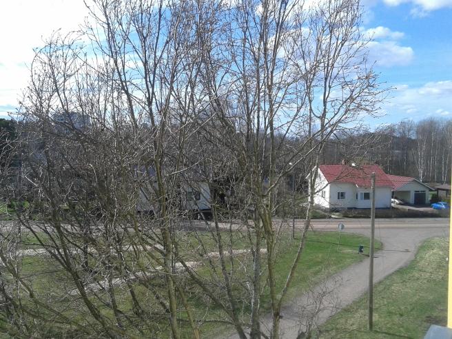Trädet som står till höger om min balkong och rakt framför fönstret till arbetsrummet har knoppar men inte så mycket mer än det :-)