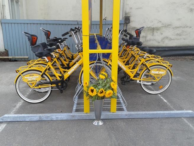 Lovisa har fått cyklar till uthyrning.