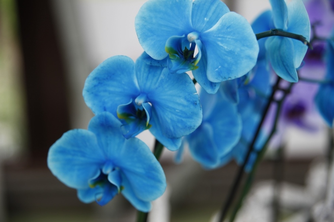 I orkidéhuset tog jag massor av bilder, älskar de här blommorna. Om den här är färgad eller inte blev oklart för mig.