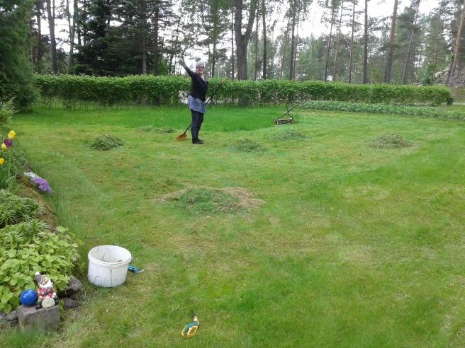 Jag klippte gräsmattan för hand och FasterAster krattade.