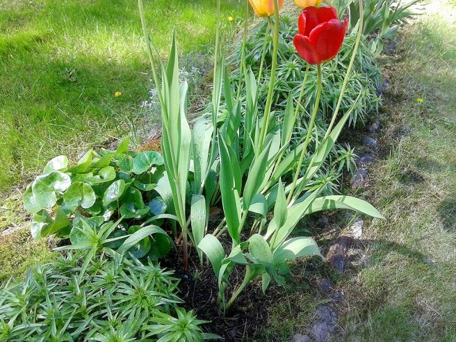 Ser under några dagar till att blommorna på Kretsgången får vatten.