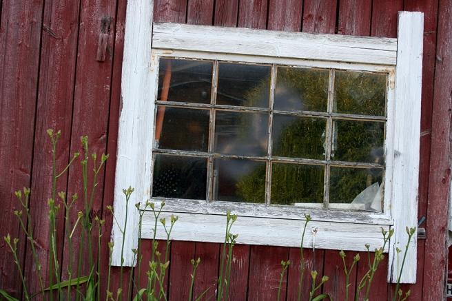 Också här speglar sig träd i fönstret.