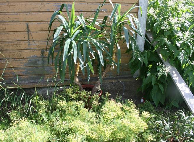 I Lovisas grannkommun växer det palmer.