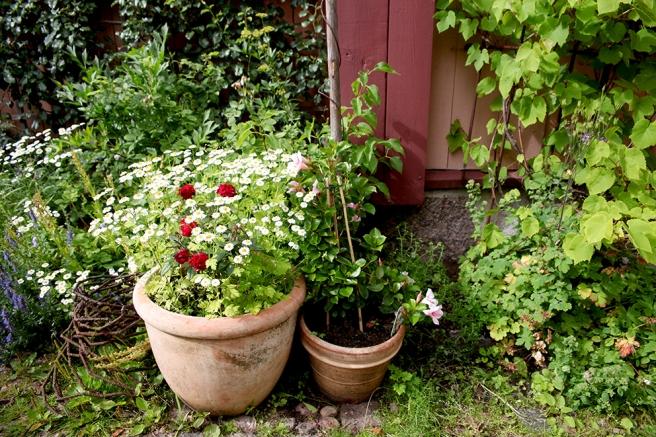 Det finns massor av växter både i krukor och i rabatt på gården.