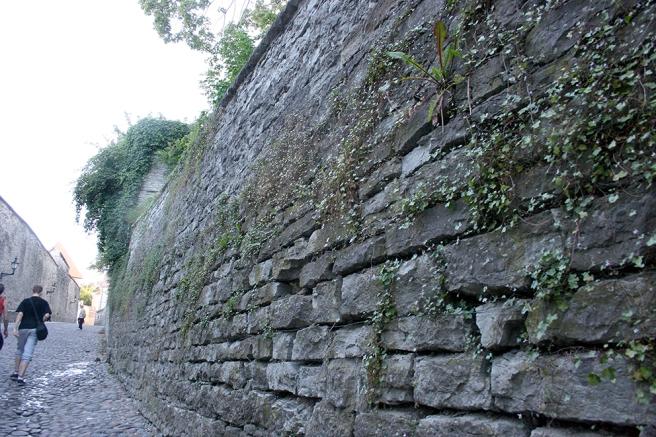 En av de många otroligt vackra murarna i Tallinn.