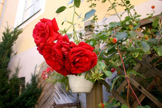 Här behövs väl inte en bildtext? Blommornas skönhet får tala för sig.
