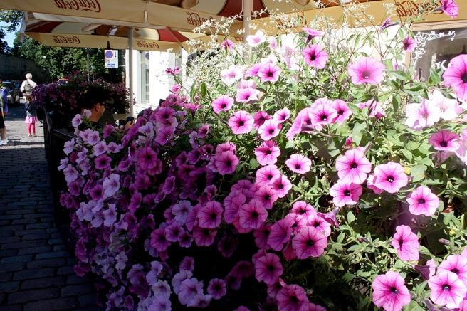 Tre stora hav av blommor utanför en servering i gamla stan.