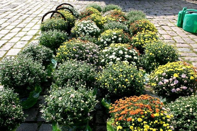 Blomster som säger att hösten är i antågande?