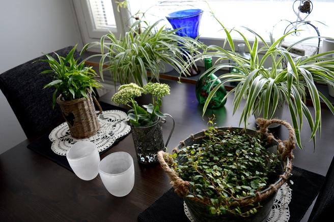 Ju fler växter jag omkring mig, desto bättre :-)